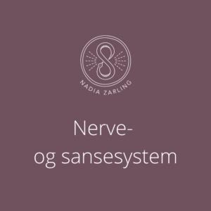Nerve- og sansesystem