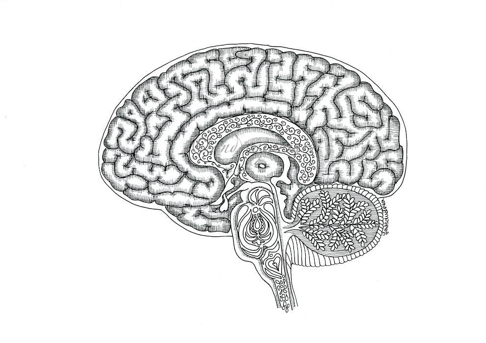 Hjernerystelse i metasundhed
